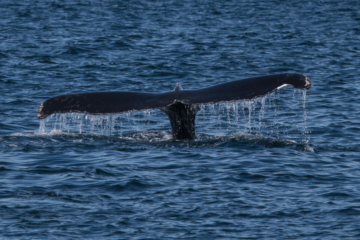 Canada: Whale Tail
