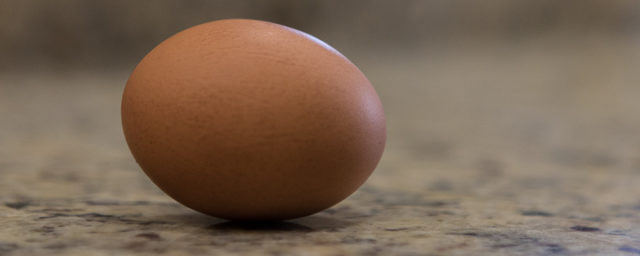 Eggnog Enthusiasm Economics
